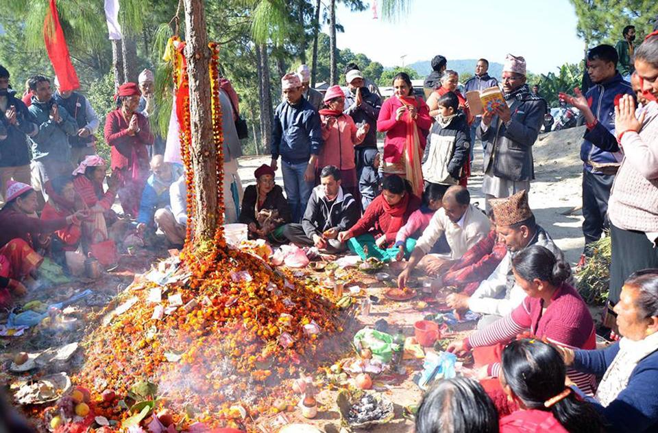 गुल्मीको रेसुङ्गा संरक्षण समितिको आयोजनामा गौशालामा बिहीबार सामूहिक रुपमा गोवर्धन पूजा गरिँदै । तस्बिरः रासस