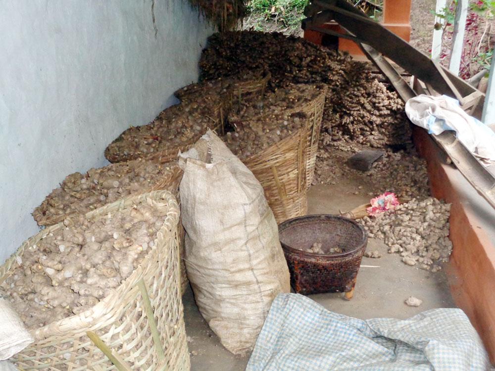 इलामको एकतप्पामा विक्रीका लागि राखिएको अदुवा । यसपटक अदुवाबाट किसानले राम्रो आम्दानी गरेका छन् । तस्वीर : रासस