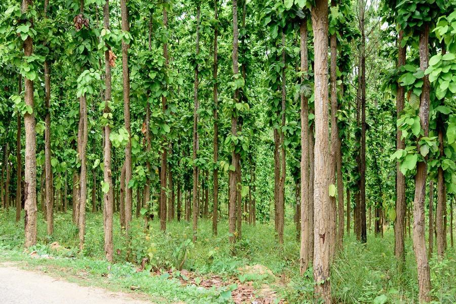 वैज्ञानिक वन व्यवस्थापनअन्तर्गत रुख कटानीको विरोध