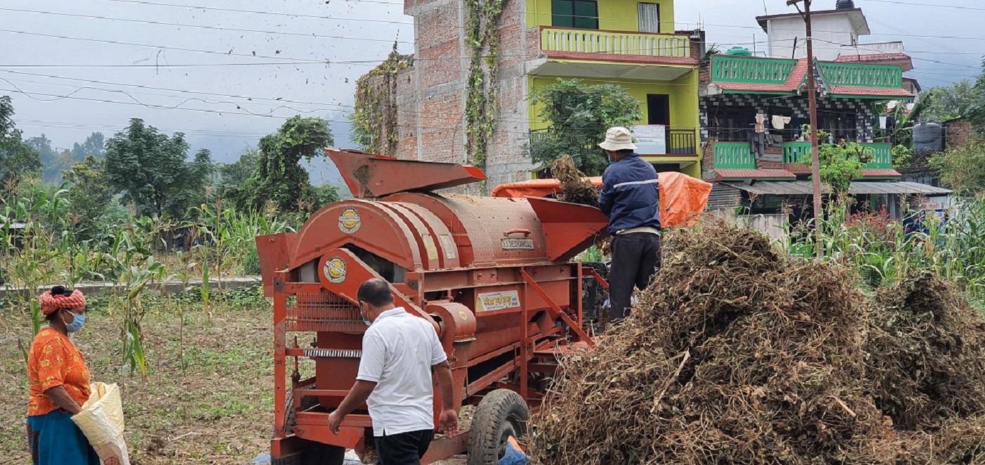 दसैं नसक्किँदै बाली भित्र्याउने चटारोमा परेका किसानलाई थ्रेसरले निकै सजिलो बनाएको छ । आँबुखैरेनी ३ को कुमबोटेमा  बुधवार थ्रेसरबाट मास कुट्दै । तस्बिर:बाह्रखरी