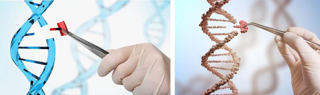 विश्वमा पहिलोपटक बच्चाको जिन परिवर्तन गराएका वैज्ञानिक विवादमा ?