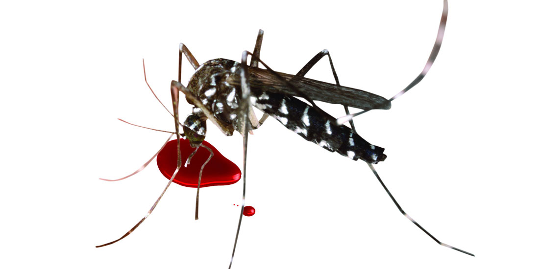 डेंगु रोगले देशभर आतंक सिर्जना गरेको हुँदा राष्ट्रिय संकट घोषणा गर्न माग
