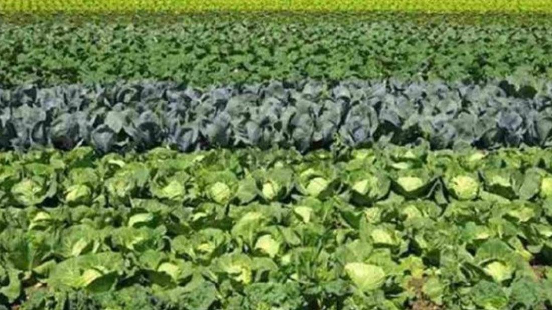 कृषकमा उत्साह थप्दै 'स्मार्ट कृषि गाउँ' कार्यक्रम
